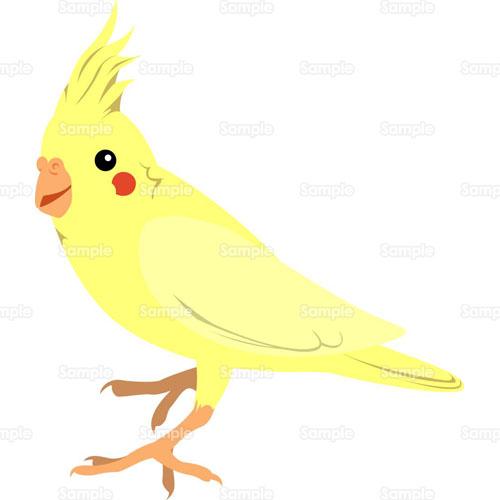 インコ,ペット,小鳥,のイラスト ...