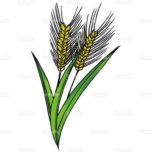 小麦,麦,穂,畑,農業,のイラスト ... : 写真無料フレーム : 無料