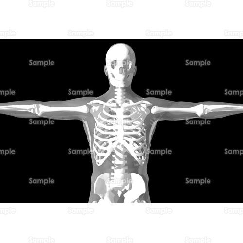 骸骨の画像 p1_8