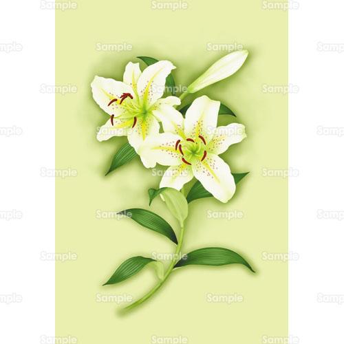百合ユリ花のイラスト0010038 クリエーターズスクウェア