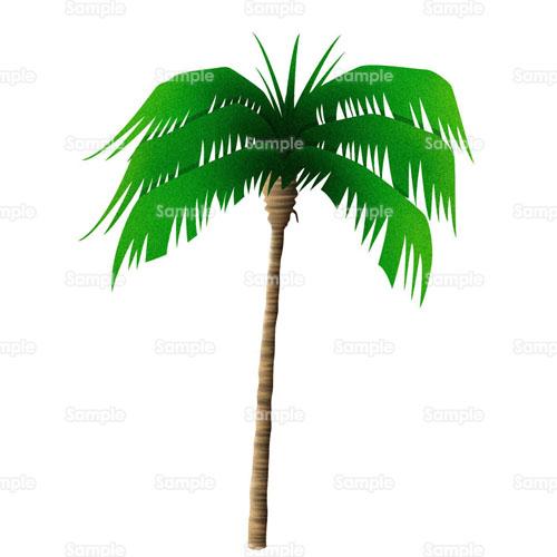 ココナツハワイ南国椰子沖縄ヤシヤシの木木のイラスト0060018