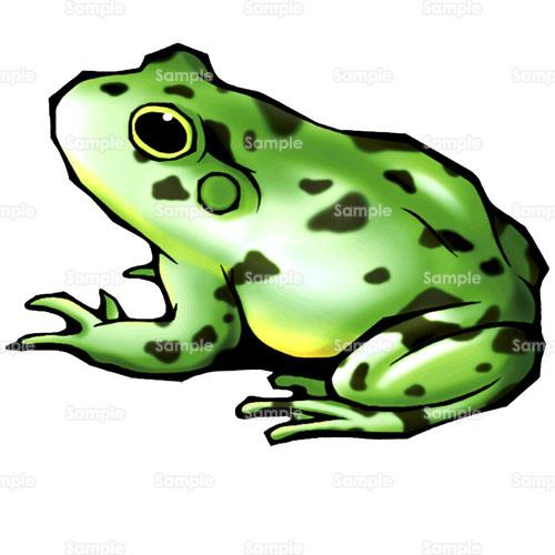 カード カード 枠 素材 : かえる,蛙,のイラスト(009_0024 ...