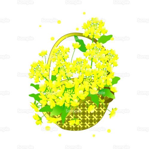 菜の花なのはな花のイラスト0140001 クリエーターズスクウェア