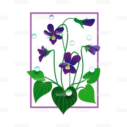 すみれ菫花のイラスト0140004 クリエーターズスクウェア