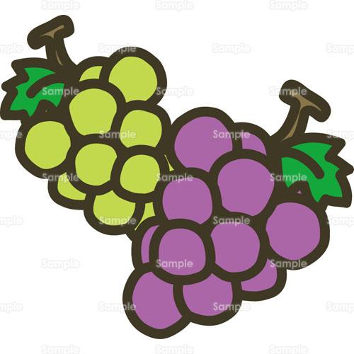 ぶどう葡萄グレープ果物フルーツのイラスト0170055