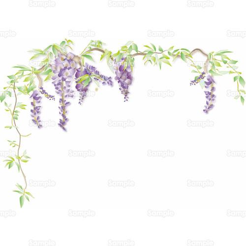 藤,フジ,花,のイラスト(031_0028...
