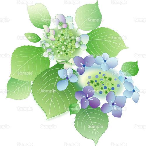 紫陽花あじさい花のイラスト0730014 クリエーターズスクウェア