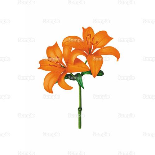 百合ユリ花のイラスト1050017 クリエーターズスクウェア