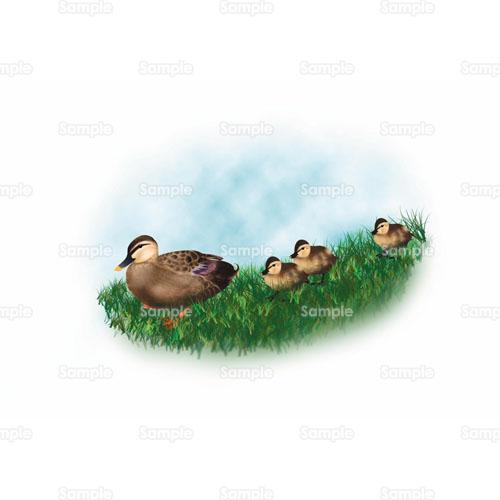 カモ鴨鳥のイラスト1050065 クリエーターズスクウェア