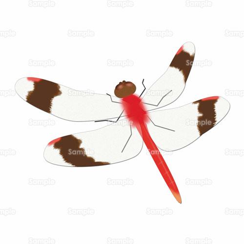 とんぼ トンボ あかとんぼ 赤トンボ 蜻蛉 昆虫 ムシ のイラスト 105 01 クリエーターズスクウェア