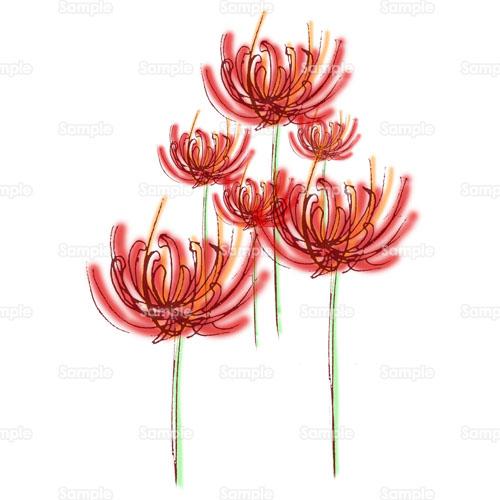 彼岸花 ヒガンバナ 曼珠沙華 マンジュシャゲ 花 のイラスト 143 0004 クリエーターズスクウェア