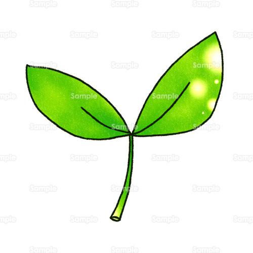 葉草葉っぱのイラスト1440081 クリエーターズスクウェア