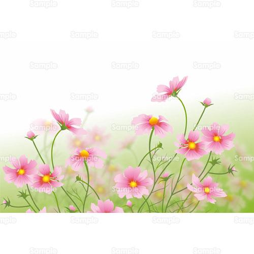 コスモス秋桜花のイラスト1770005 クリエーターズスクウェア