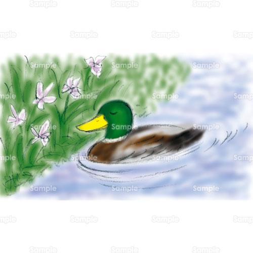 鳥鴨カモ水辺花デフォルメのイラスト1780165 クリエーターズ