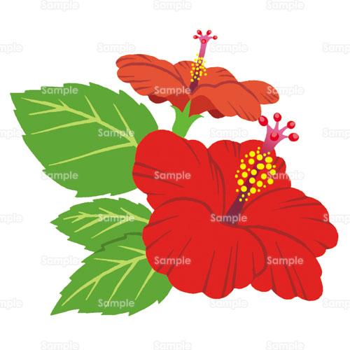 ハイビスカス花のイラスト1950026 クリエーターズスクウェア