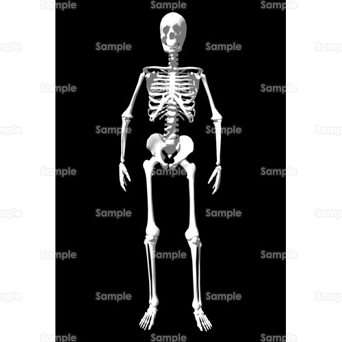 骨ガイコツ骸骨標本理科実験のイラスト69ir22 クリエーターズ