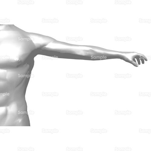 人体腕筋肉人間体骨格のイラスト69ir25 クリエーターズスクウェア